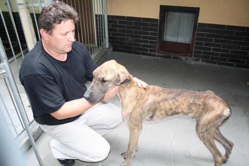 Chovatelka na Ostravsku nechala vyhladovět 11 psů