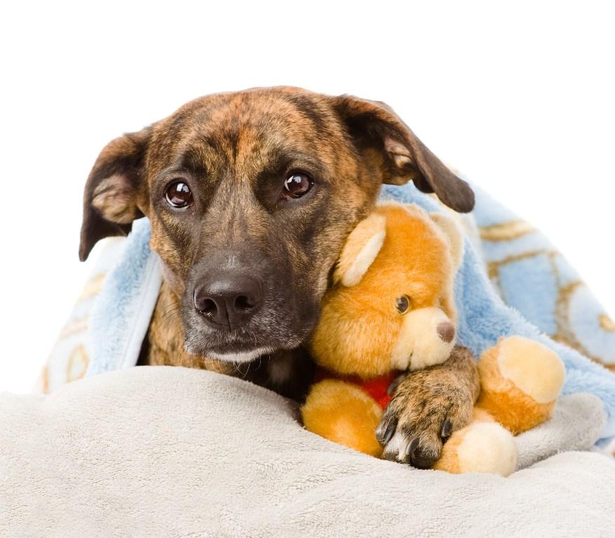 Parvoviróza u psů - prevence, příznaky a léčba