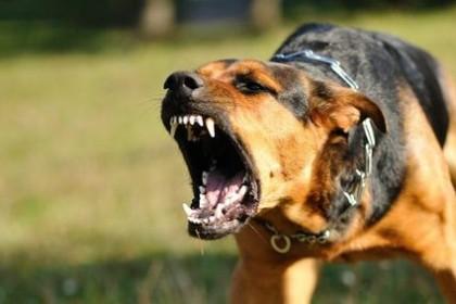 Vzteklina u psů - prevence, příznaky a léčba