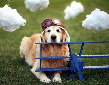 Cestování a přeprava psa letadlem