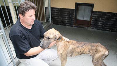 Šéf psího útulku Jaromír Somerlík ukazuje vyhladovělou dogu, která byla spolu s dalšími deseti psy zabavena nezodpovědné chovatelce.