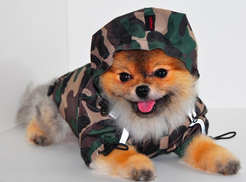 psi oblecky moda 3