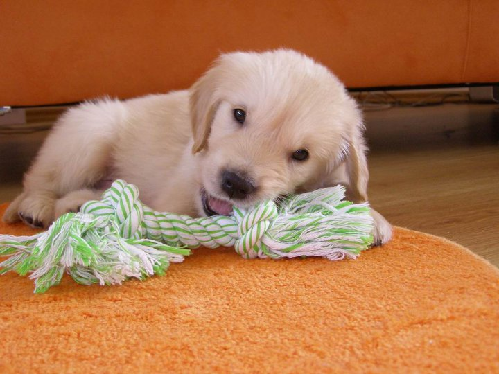 Psi a co o nich rekli osobnosti