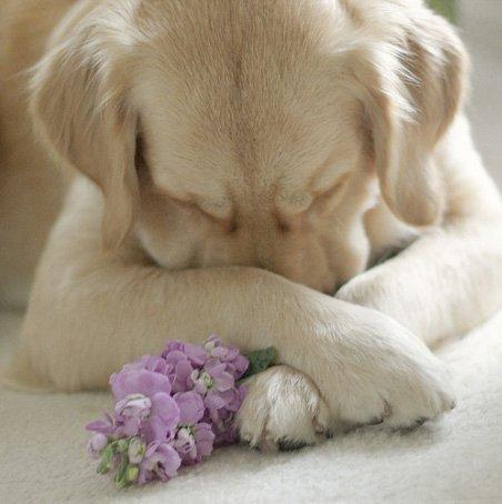 psi prosba a modlitba