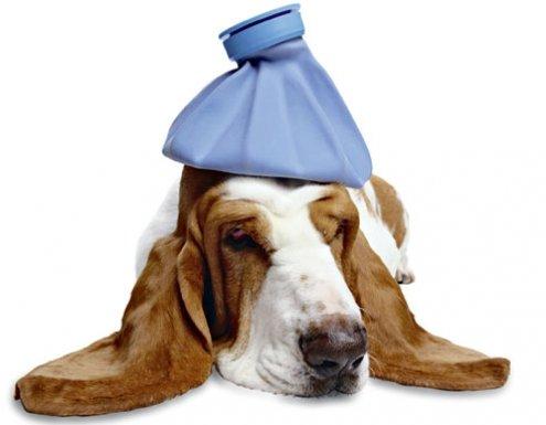 Anální žlázky u psů - prevence, příznaky a léčba