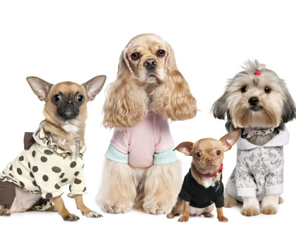 Je oblékání psa nutnost nebo módní doplněk?