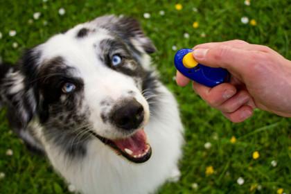 Clicker trénink a pozitivní výchova psa