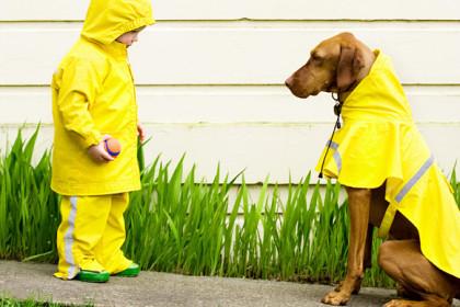 změřit psa