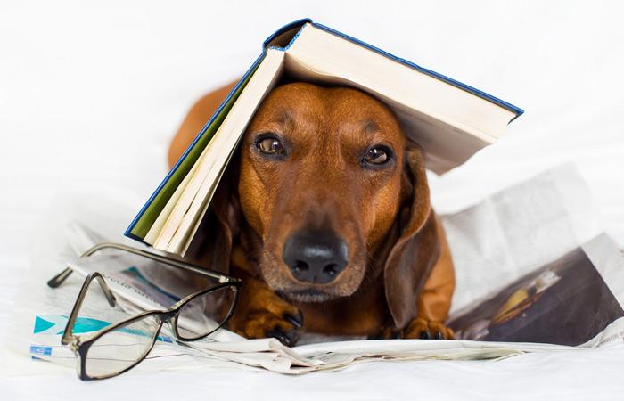 Test: Jak máte chytrého psa?