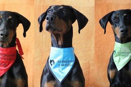 Dobrmani v nouzi - smutné osudy psů